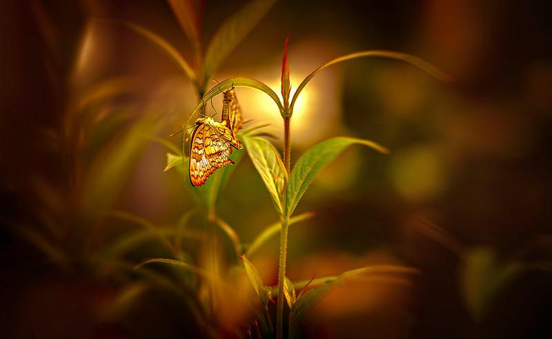 Butterfly-148.jpg