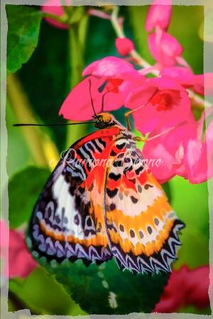 Butterfly as Art