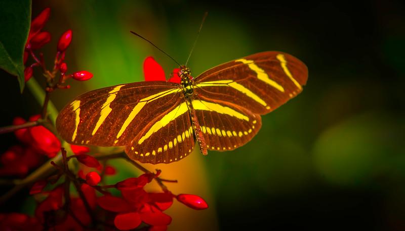 Butterfly-110.jpg