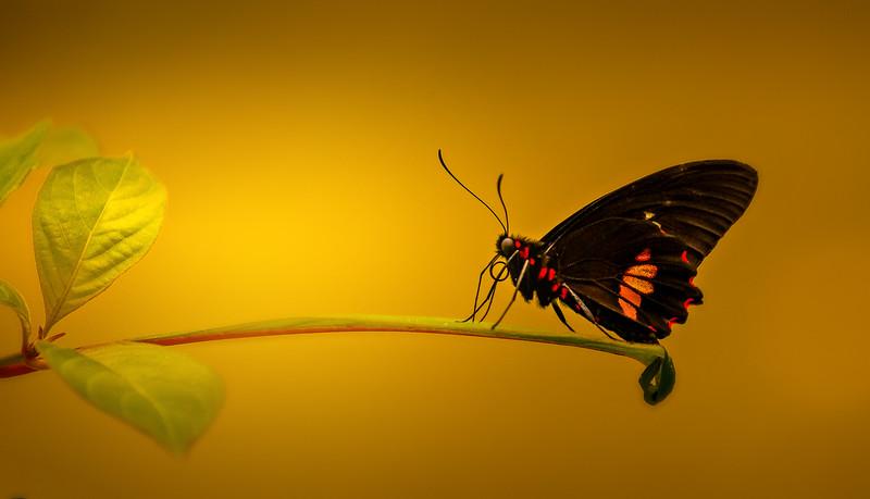 Butterfly-021.jpg