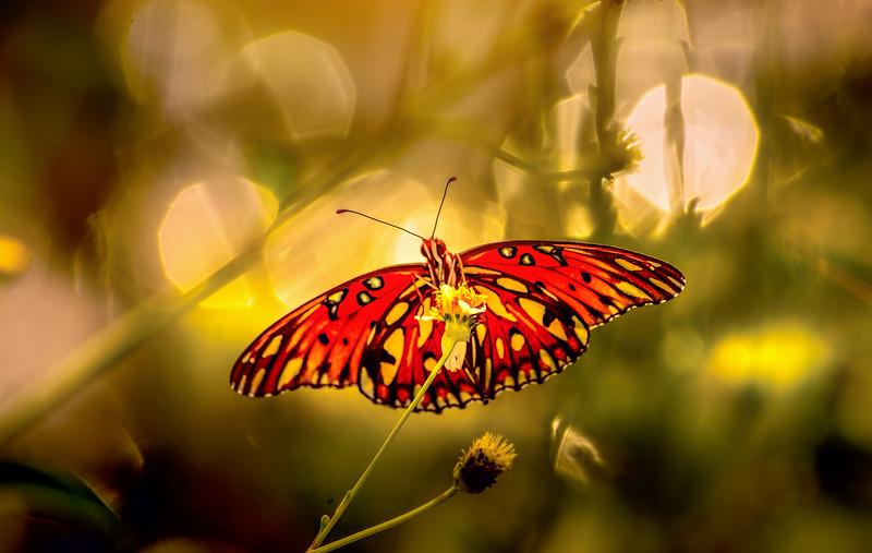 Butterfly-157.jpg