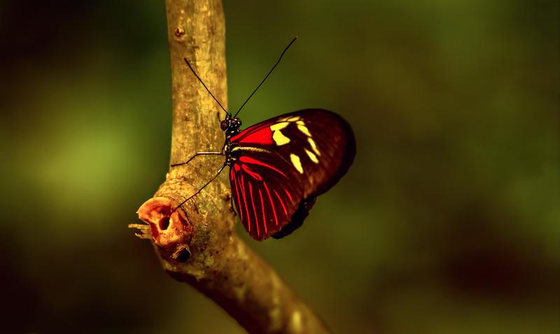 Butterfly-048.jpg