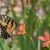 Butterfly E4A6098