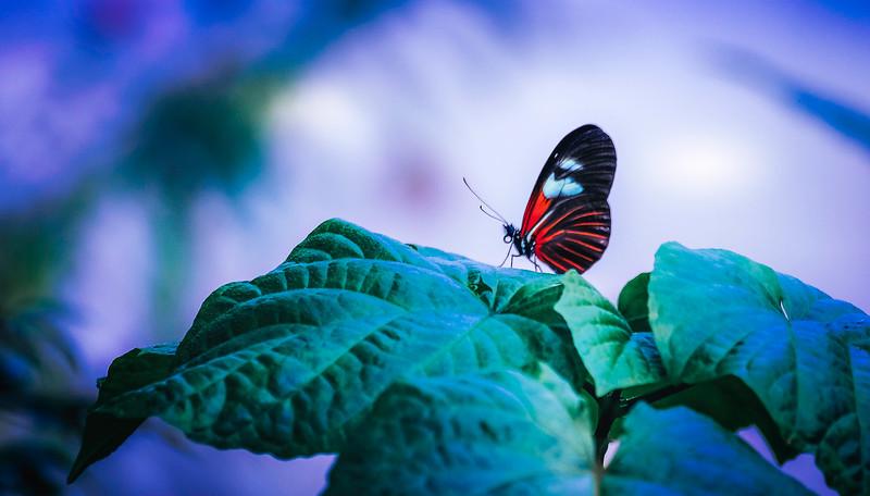 Butterfly-116.jpg