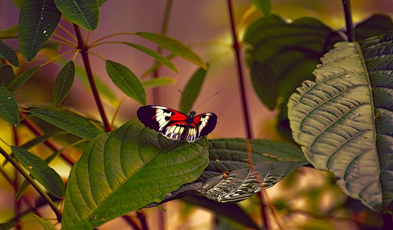 Butterfly-216.jpg