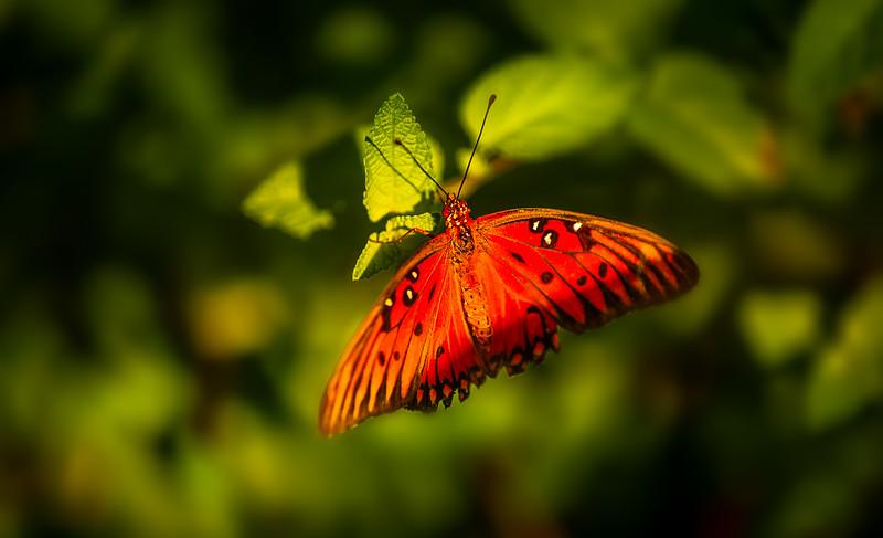 Butterfly-169.jpg