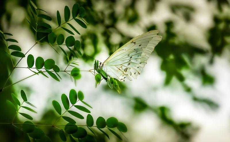 Butterfly-015.jpg