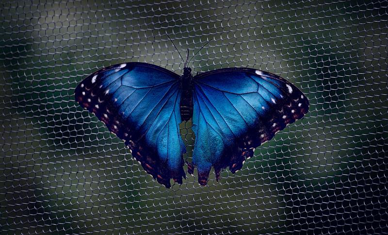 Butterfly-039.jpg