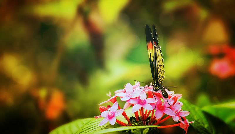 Butterfly-198.jpg