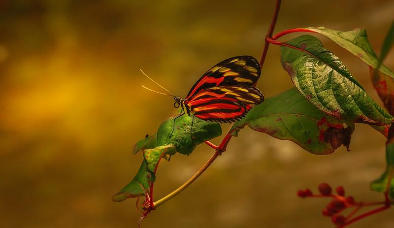 Butterfly-041.jpg