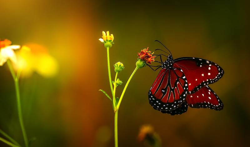Butterfly-177.jpg