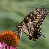 Butterfly E4A5814