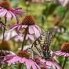 Butterfly E4A6302