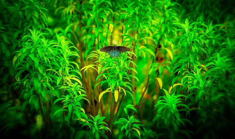 Butterfly-101.jpg
