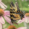 Butterfly E4A6113