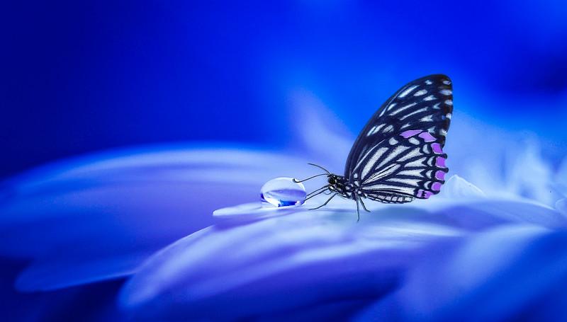 Butterfly-132.jpg