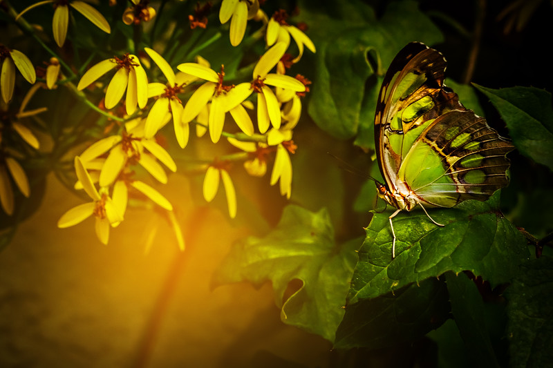 Butterfly-042.jpg