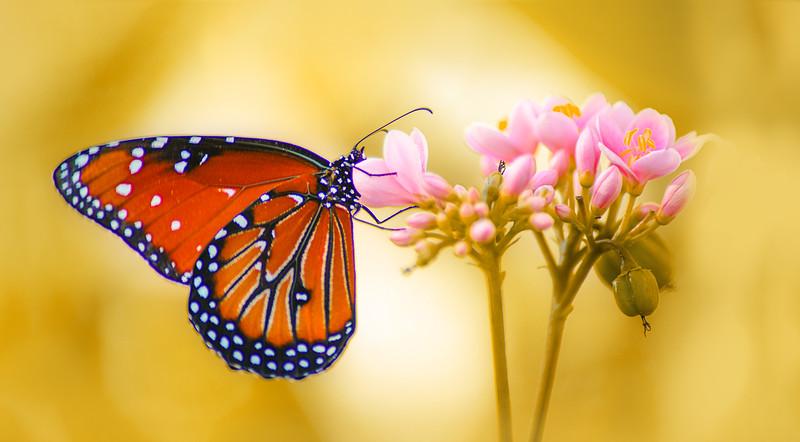 Butterfly-165.jpg