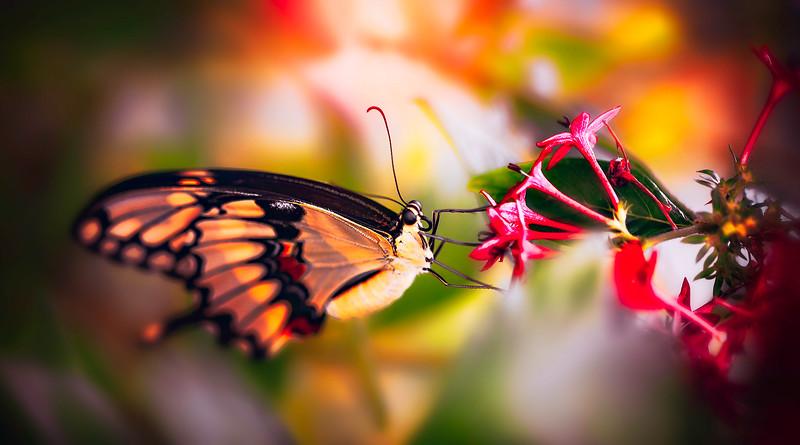 Butterfly-163.jpg