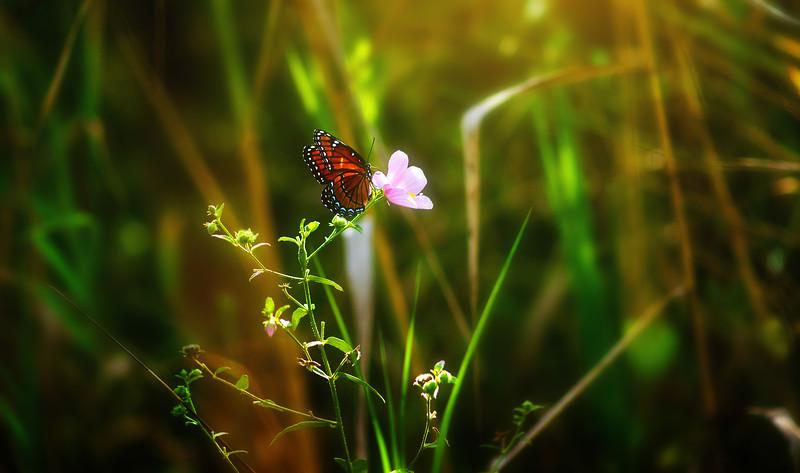 Butterfly-161.jpg