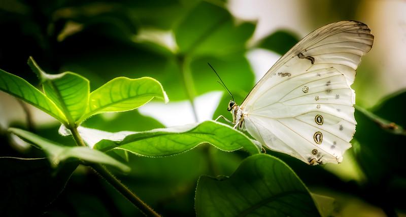 Butterflies-002.jpg