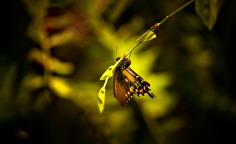 Butterfly-117.jpg
