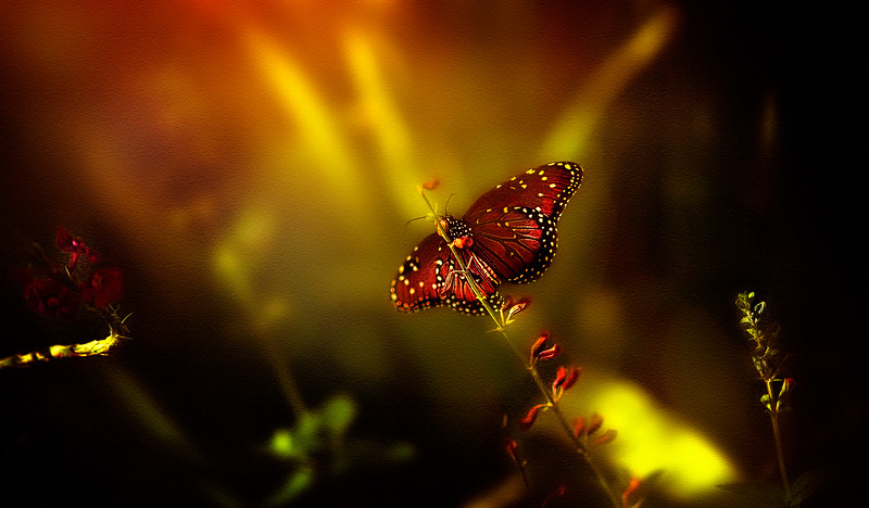 Butterfly by Ray Bilcliff - www.trueportraits.com
