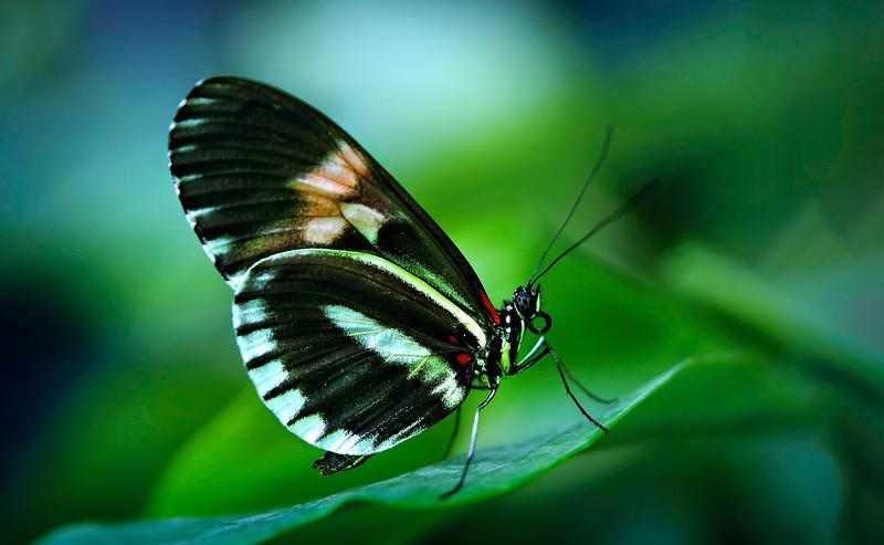 Butterfly-076.jpg