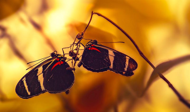 Butterfly-007.jpg
