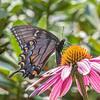 Butterfly E4A6126