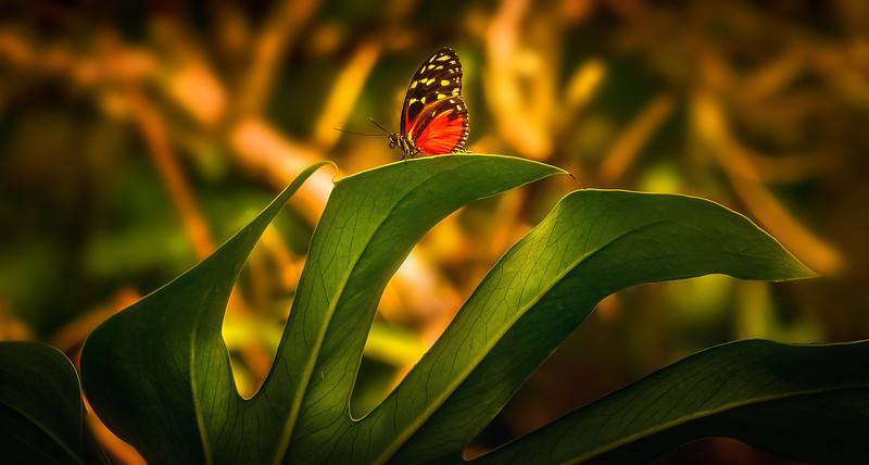 Butterflies-016.jpg