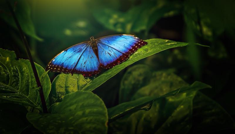 Butterfly-056.jpg