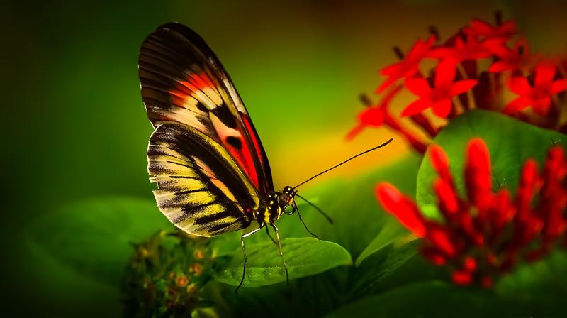Butterfly-200.jpg