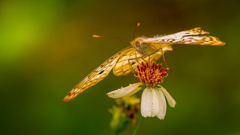 Butterfly-175.jpg
