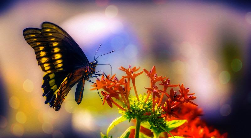 Butterflies by Ray Bilcliff - www.trueportraits.com