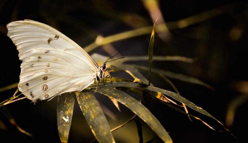 Butterfly-024.jpg