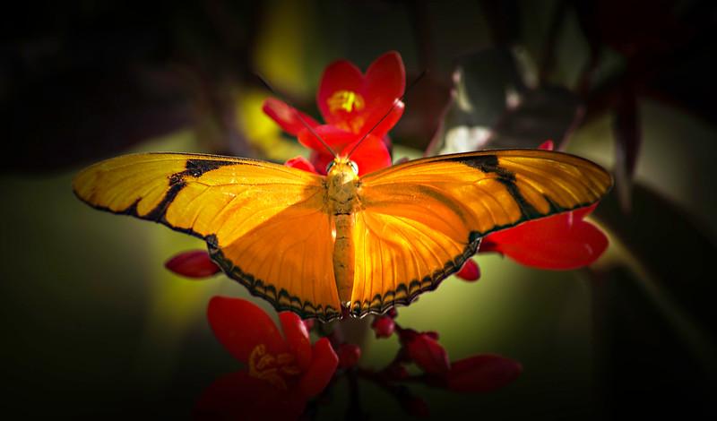 Butterfly-120.jpg