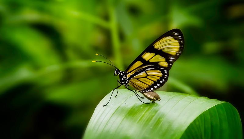 Butterfly-130.jpg