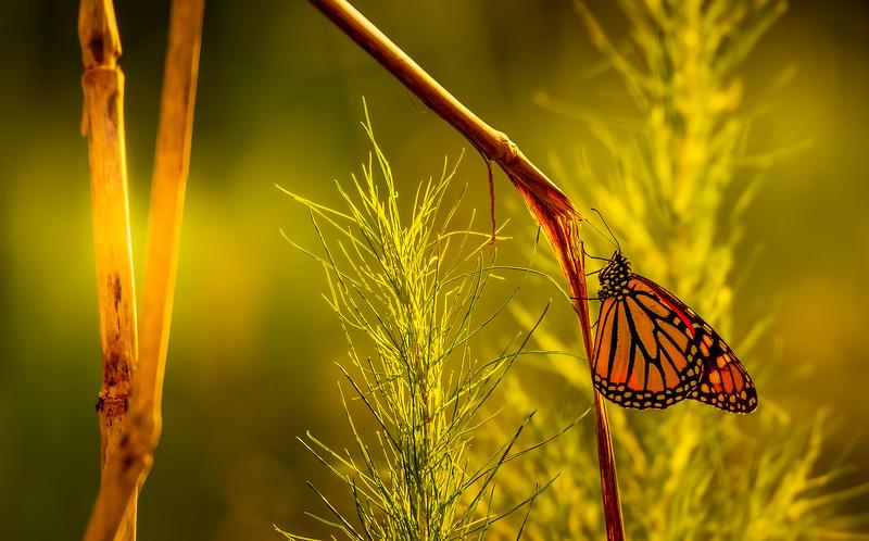 Butterfly-059.jpg