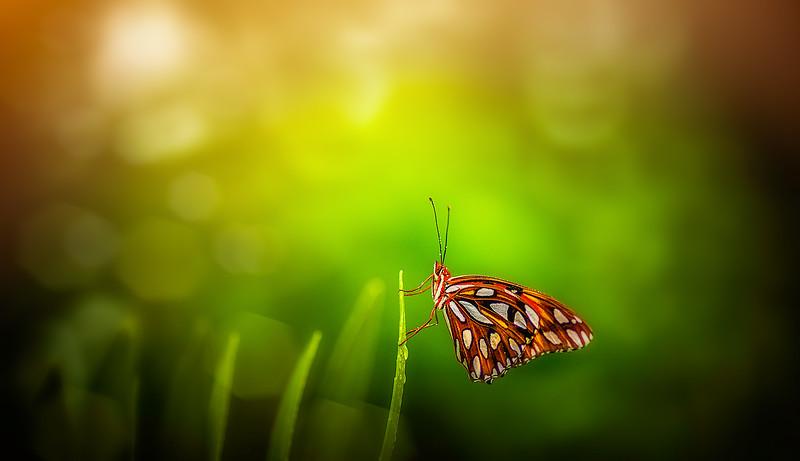 Butterfly-098.jpg