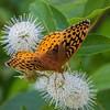 butterfly             411