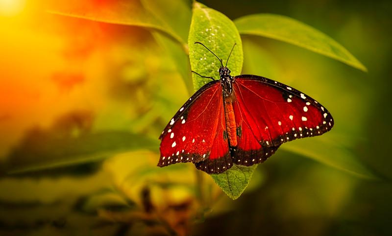 Butterfly-141.jpg