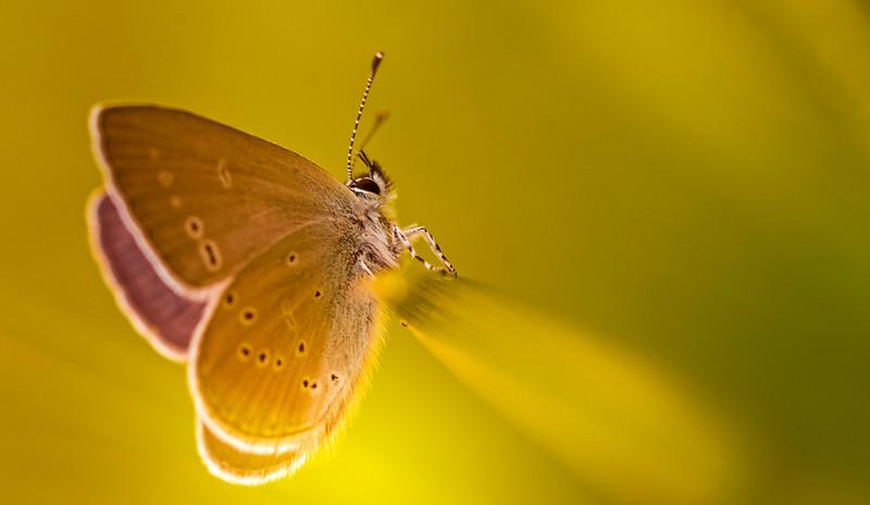 Butterfly-135.jpg