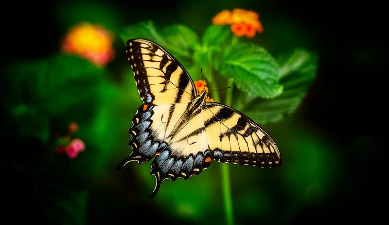 Butterfly-156.jpg