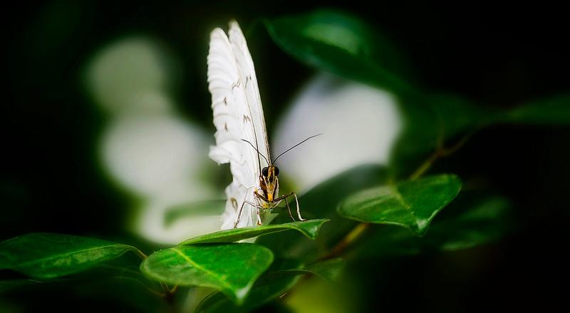 Butterfly-160.jpg