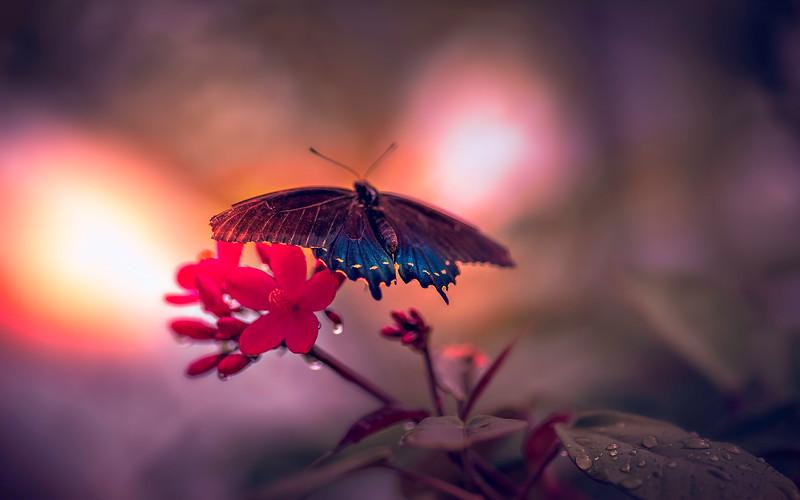 Butterfly-097.jpg