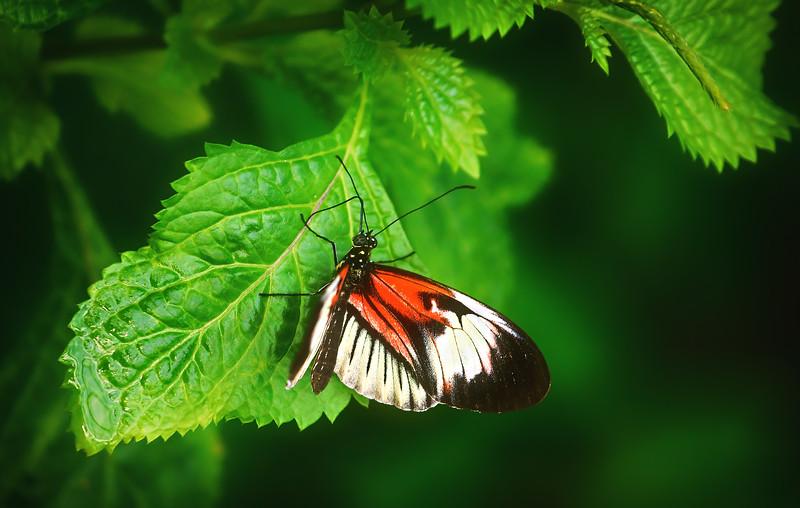 Butterfly-205.jpg