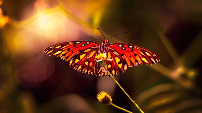 Butterfly-147.jpg