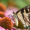 Butterfly E4A6258