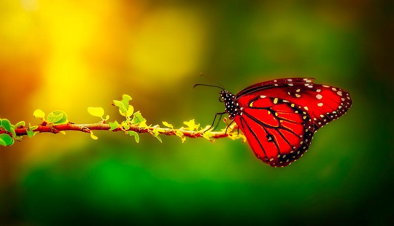 Butterfly-107.jpg